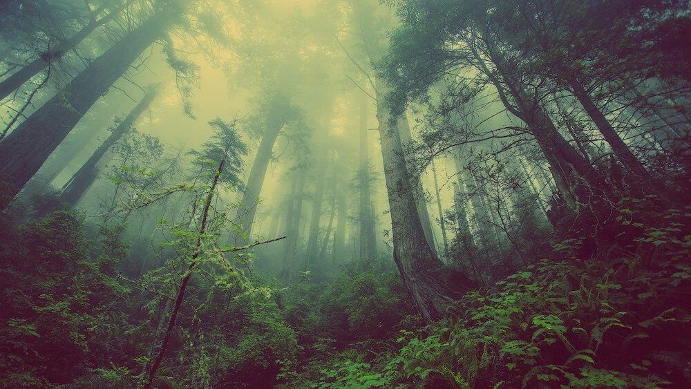 Picture of misty forrest