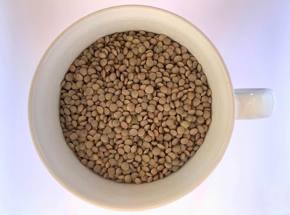Cup of raw pardina lentils